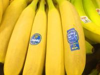 Fun Fact: Bananas skins can  help mollify mosquito bites. Credit: Mike Maginn