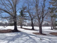Snow is hanging on this year, melting slowly but inevitably, starting with the trees. Credit: Mike Maginn