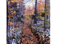 A hike along a forest trail restores the mind and spirit. Credit: Steve Hines