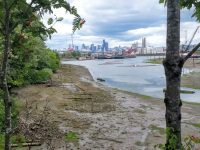 Duwamish River, looking to downtown Seattle, used to meander through the salt marsh.   Credit: John Nelson