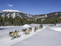 Dog Sled rides with Mountain Man Adventures. Credit: Sun Peaks Resort.