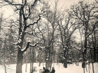 Snow In Literature: Stopping By Woods On A Snowy Evening