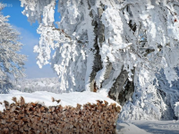 Snow In Literature: The Wood-pile