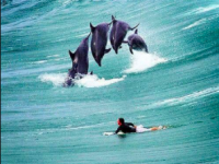 Five Life Lessons From Surfing with Dolphins