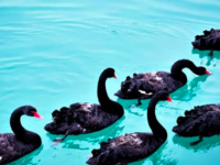 Lots of Black Swans this year. Enough already!