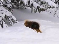 That's one sharp porcupine. Credit: Laurie O'Connor
